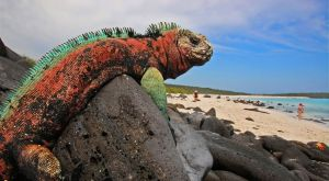 Gardner Bay, ESPAÑOLA ISLAND - The Galapagos Islands