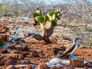 NORTH SEYMOUR ISLAND - The Galapagos Islands
