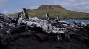 CHINESE HAT ISLAND - The Galapagos Islands