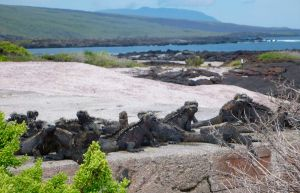 Isabela Island - The Galapagos Islands